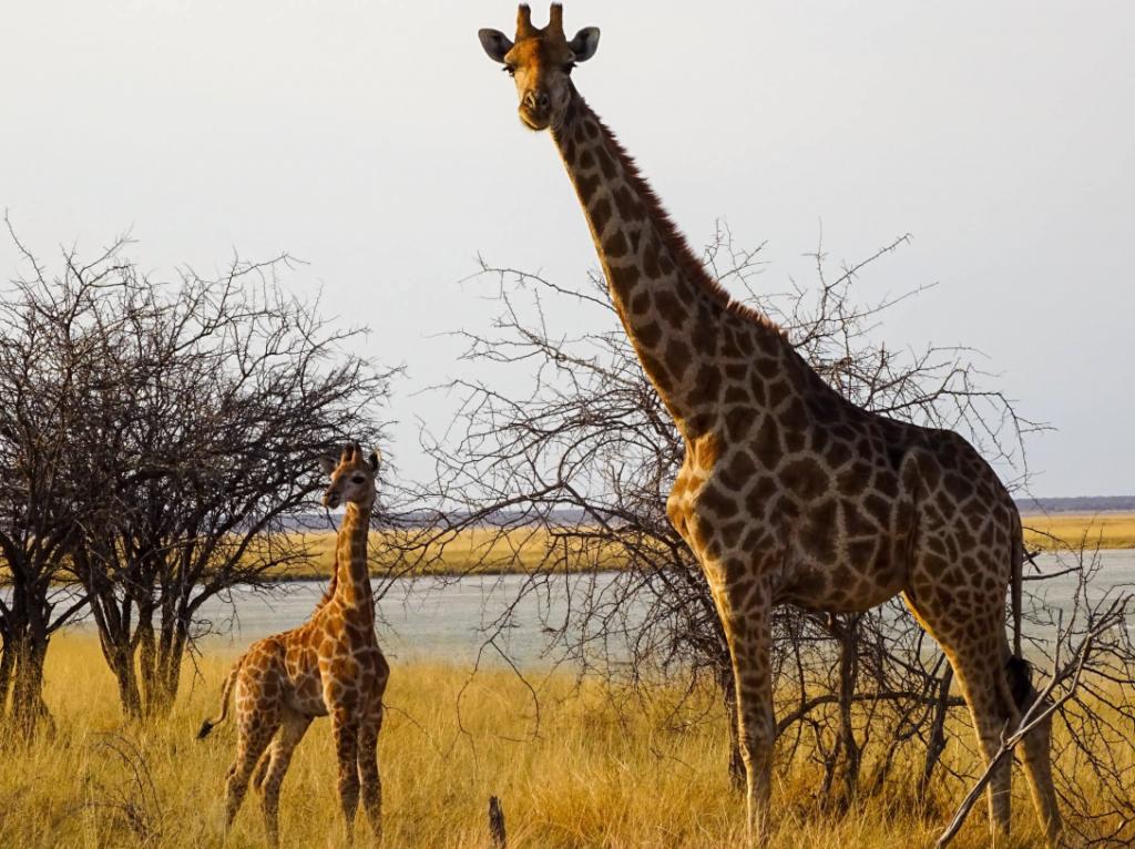 """AUSVERKAUFT! Mit dem Fahrrad durch Afrika, 414 Tage, 15 Länder: """"Anderswo. Allein in Afrika""""!"""