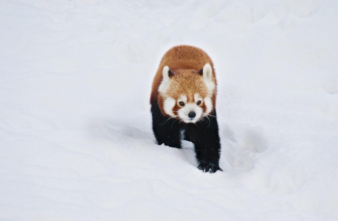 Ho! Ho! Ho! 🎅 Gewinne 1×2 Winterkarten für Hagenbecks Tierpark. 🎁