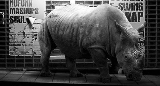 Das Rhino Soulsystem bringt gute Laune & dicke Trap-Beats!