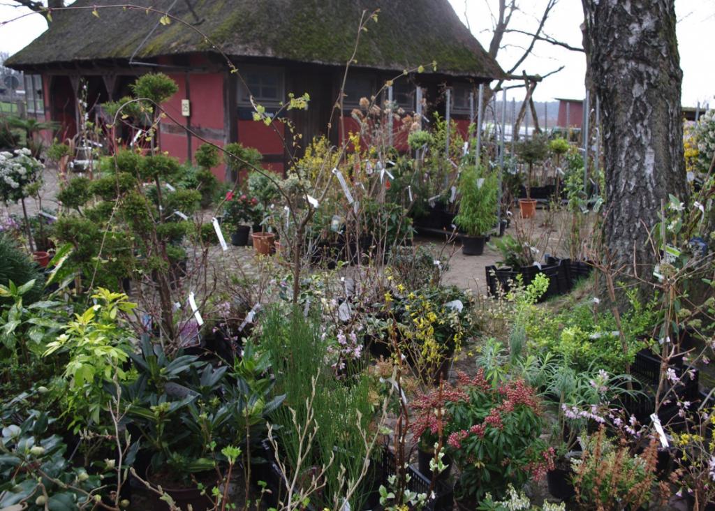 Der Pflanzenmarkt beglückt Freunde des Grüns mit 130 Ausstellern!