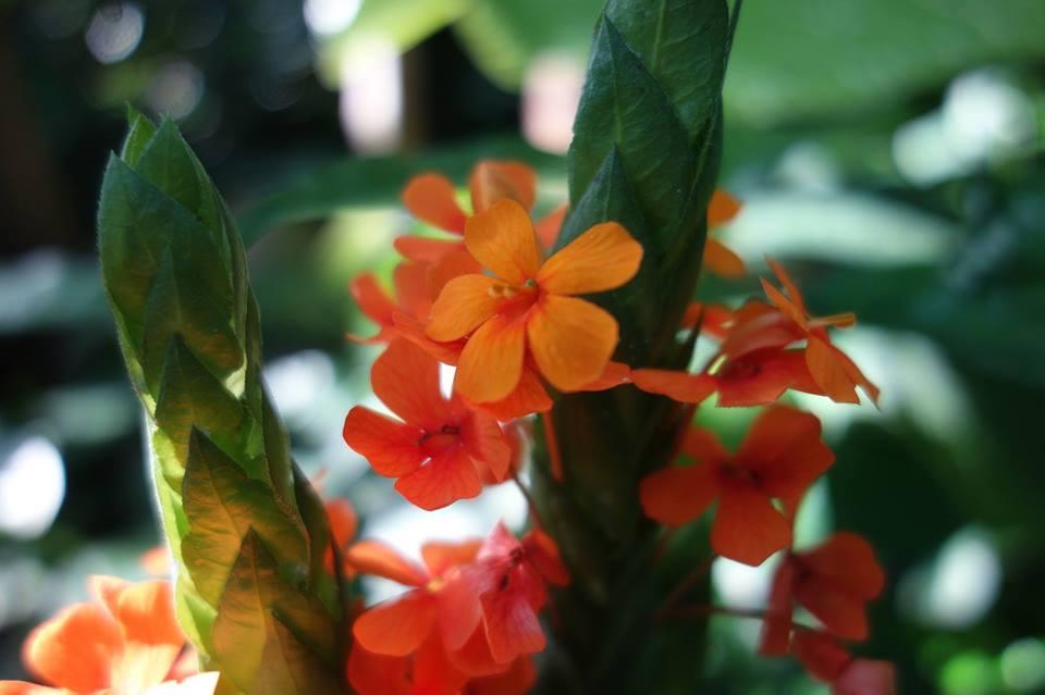 Im Botanischen Garten erhältst du detaillierte Einblicke in Floras Liebesleben.