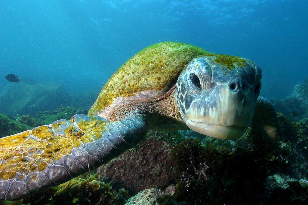 Geh mit David Hettich auf Unterwasserreise bei Abenteuer Horizont!