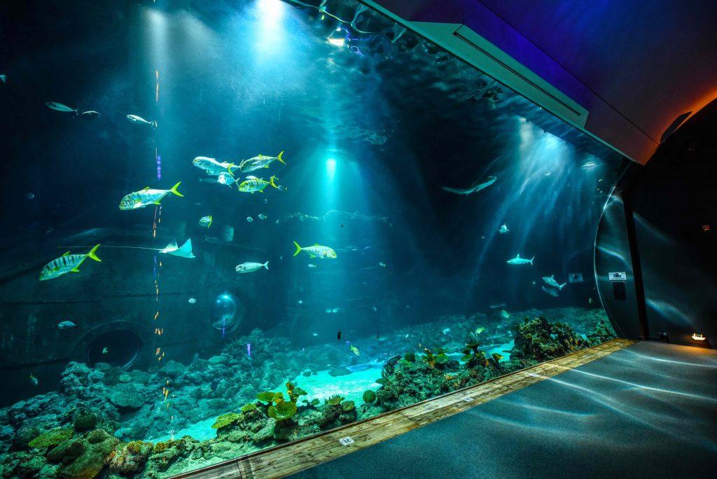 Türchen 4 🎁 Wir verlosen 1×2 Tickets für das Hagenbeck Tropen-Aquarium.