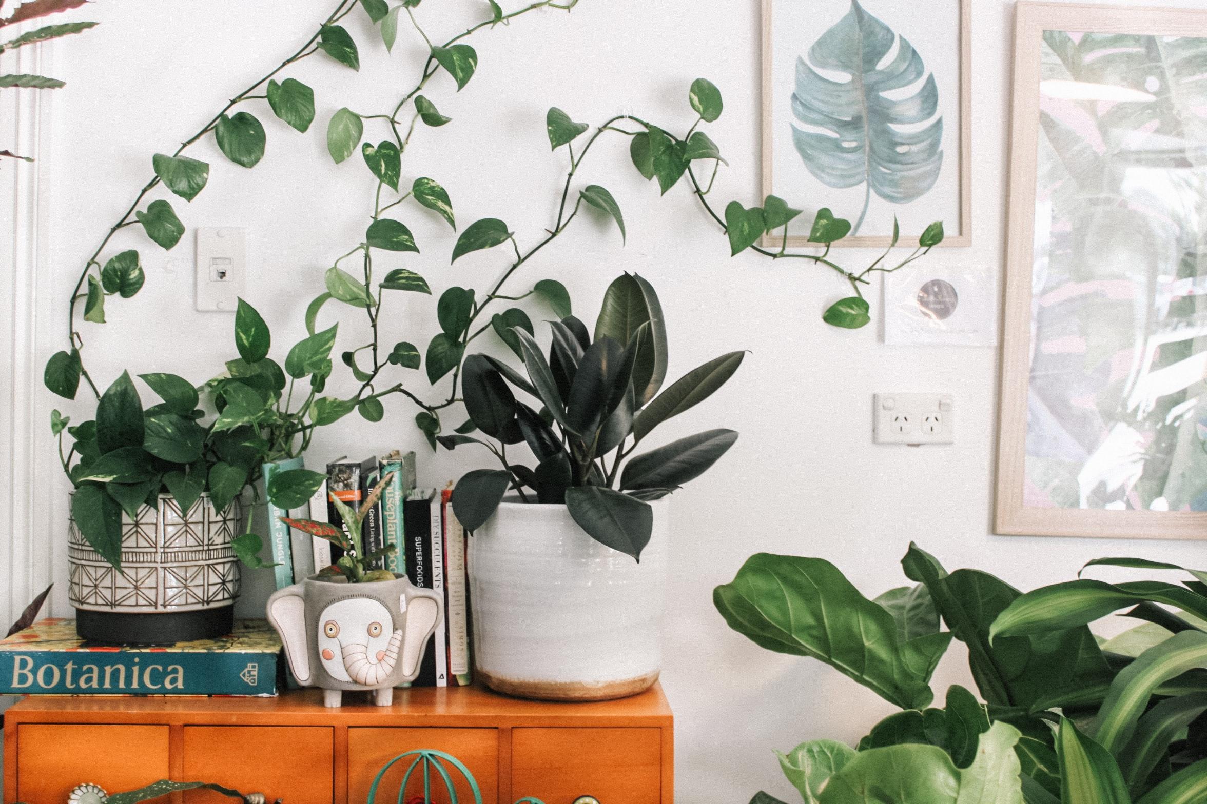Kalter Kaffee? Deine Pflanzen macht er wieder munter!