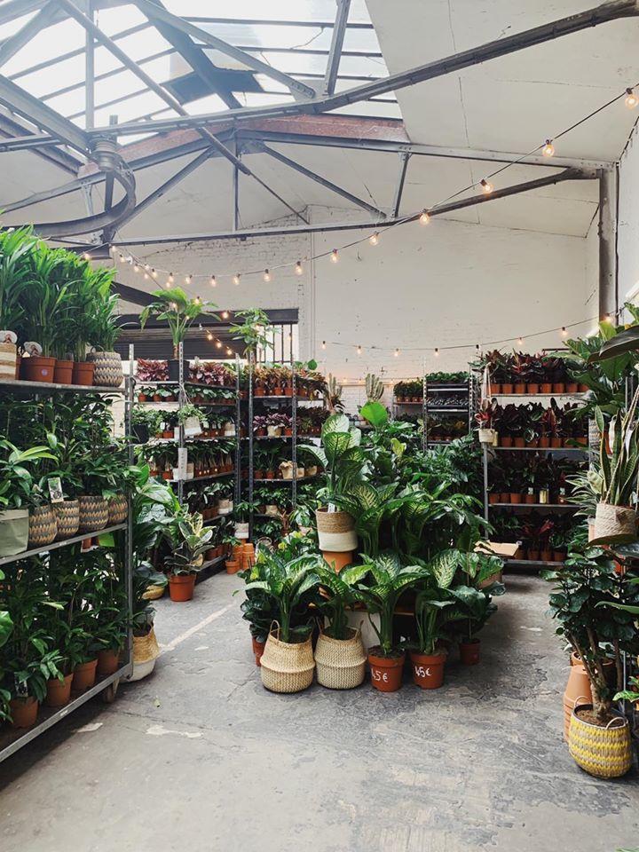 Pflanzen, Pflanzen, Pflanzen: Ab zum Bergamotte Pop Up Dschungel!