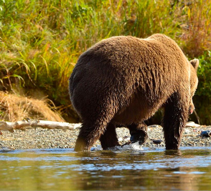 """Sehnsucht nach der Natur? """"Der Bär in mir"""" nimmt dich mit in die Welt des Tieres."""