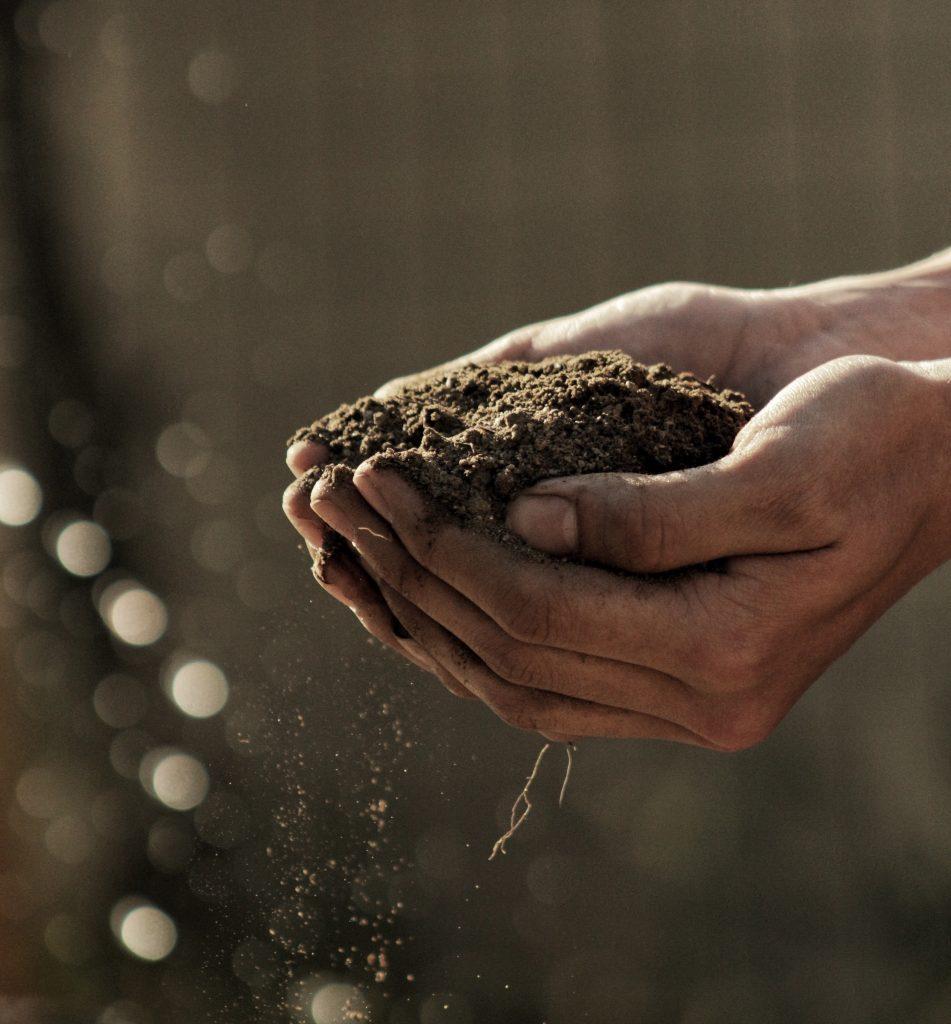Wohin mit dem Biomüll? Lege einen eigenen Kompost an!