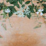 Blumen Pflanzen floral