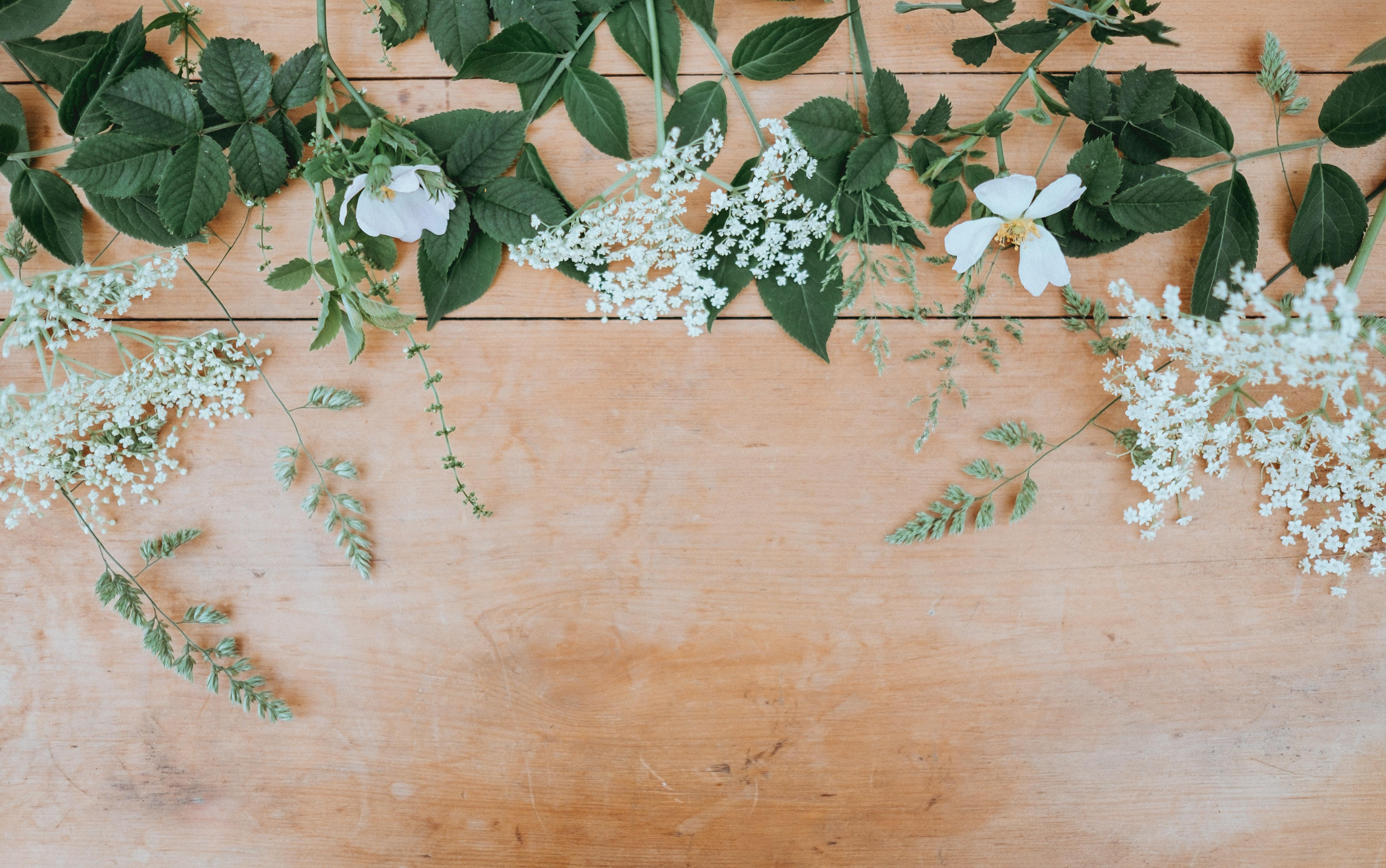 Beweise einen grünen Daumen und gönne dir Pflanzen beim großen Verkauf!