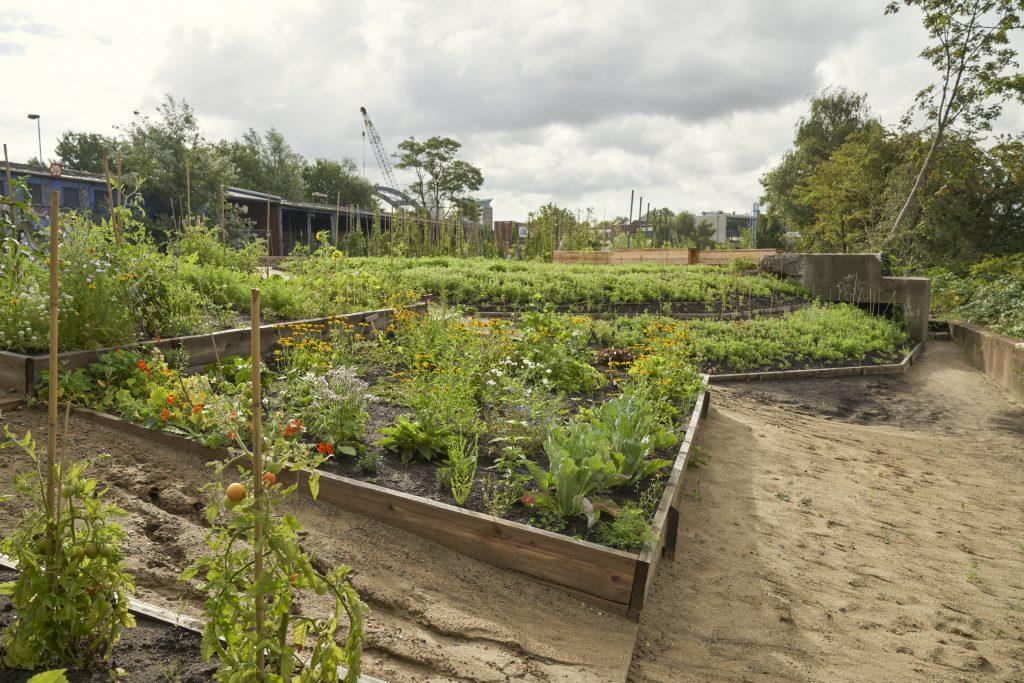 Lust auf gemeinsames Gärtnern? Dann ab zu PARKS.