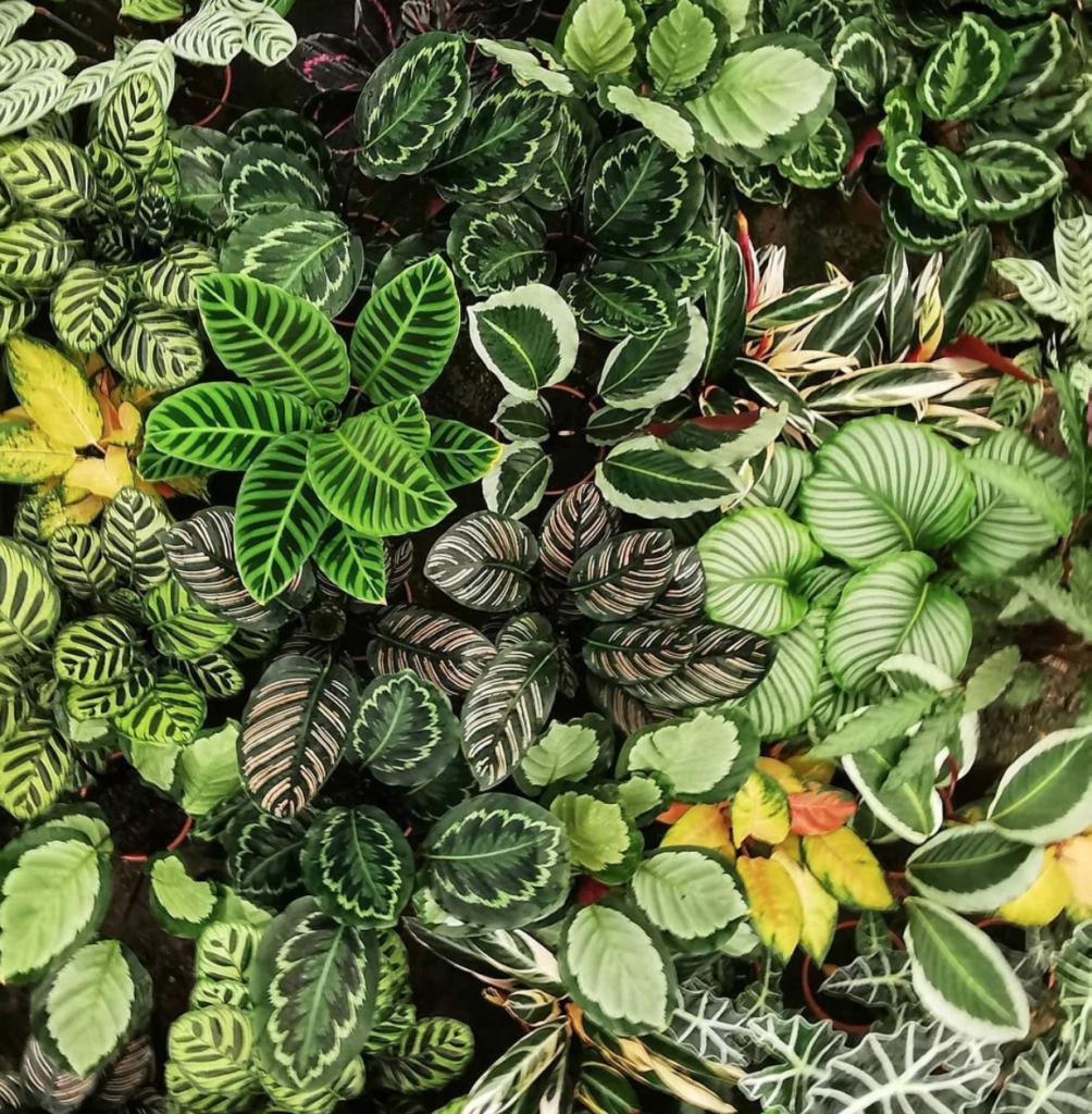 Grünes für deine vier Wände bekommst du bei Pflanzen für Alle!