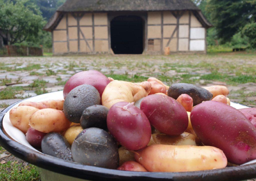 Unser liebstes Gemüse: Auf dem Kiekeberg wird der Kartoffeltag gefeiert.